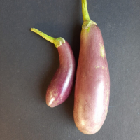 Brinjal Purple/Blue Long